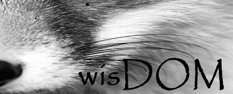 BDSM | Dominance submission | wisDOM